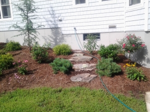New Home Backyard Plantings