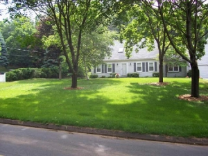 A Lawn on Shady Property