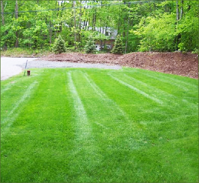 Country Landscaping - Testimonials