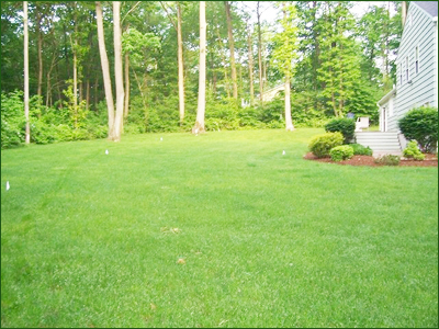 Country Landscaping - Lawn Installation